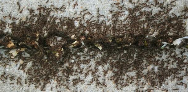 usar-canela-contra-formigas-em-casa